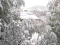 冬のモモヤマトル
